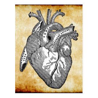 ヴィンテージのハートの解剖学 ポストカード