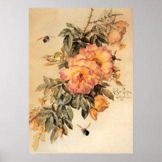 ヴィンテージのバラおよび《昆虫》マルハナバチ ポスター