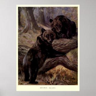 ヴィンテージのヒグマPainting (1909年) ポスター