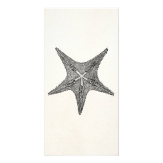 ヴィンテージのヒトデの旧式な星の魚のテンプレート カード