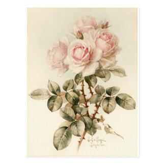 ヴィンテージのビクトリアンでロマンチックなバラ ポストカード