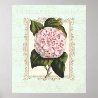ヴィンテージのピンクおよび白いツバキのぼろぼろの優雅 ポスター