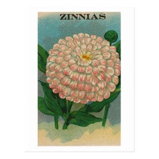 ヴィンテージのピンクの《植物》百日草の種の包みの郵便はがき ポストカード