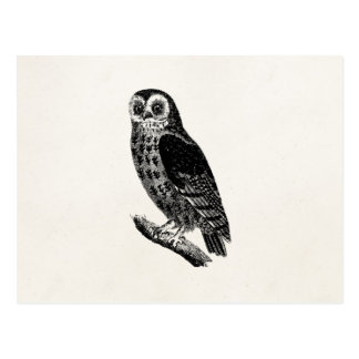 ヴィンテージのフクロウのイラストレーションのレトロの旧式なフクロウの鳥 ポストカード