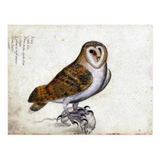 ヴィンテージのフクロウのイラストレーション ポストカード
