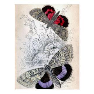 ヴィンテージのフランスのな蝶イラストレーション-郵便はがき ポストカード