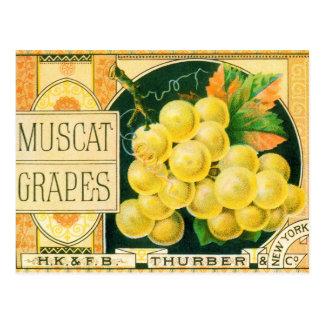 ヴィンテージのフルーツの木枠のラベルの芸術、マスカットブドウ ポストカード
