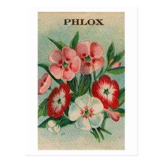 ヴィンテージのフロックス属の種の包みの郵便はがき ポストカード