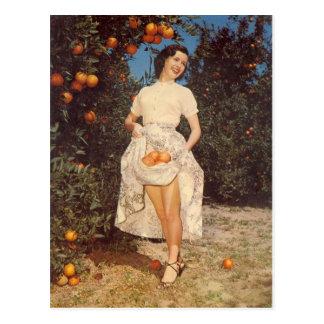 ヴィンテージのフロリダのオレンジの郵便はがき ポストカード