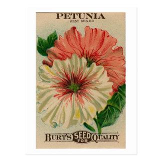 ヴィンテージのペチュニアの種の包みの郵便はがき ポストカード