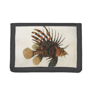 ヴィンテージのミノカサゴの魚、海洋の海の生命動物