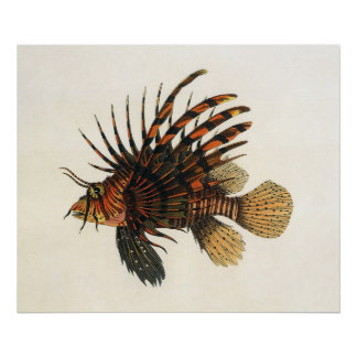 ヴィンテージのミノカサゴの魚、海洋の海の生命動物 ポスター