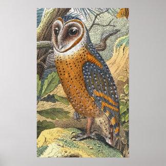 ヴィンテージのメンフクロウの絵画のプリント ポスター