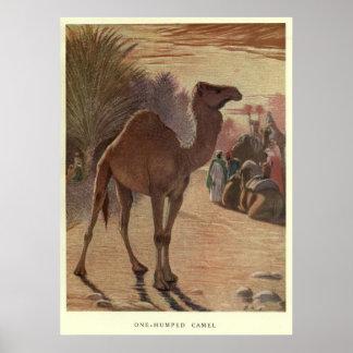 ヴィンテージのラクダPainting (1909年) ポスター
