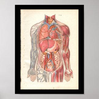 ヴィンテージの人間の内部解剖学のプリント ポスター