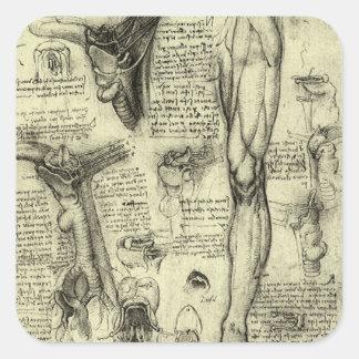 ヴィンテージの人間の解剖学の喉頭の足レオナルド・ダ・ヴィンチ スクエアシール
