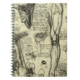 ヴィンテージの人間の解剖学の喉頭の足レオナルド・ダ・ヴィンチ ノートブック