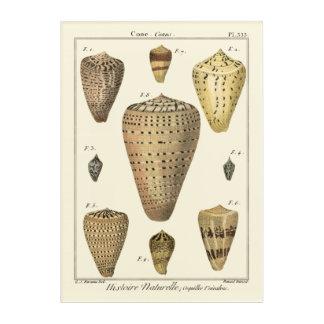 ヴィンテージの円錐形の貝 アクリルウォールアート
