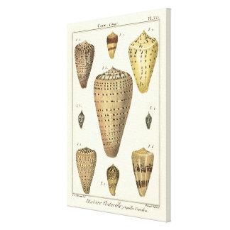 ヴィンテージの円錐形の貝 キャンバスプリント