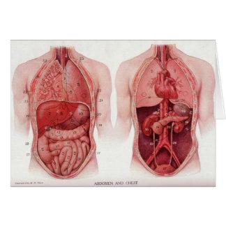 ヴィンテージの医学のイラストレーション、解剖学 カード