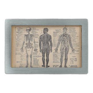 ヴィンテージの医学の解剖学の図表のベルトの留め金 長方形ベルトバックル
