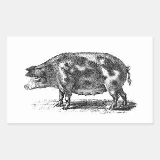 ヴィンテージの国内ブタのイラストレーション- 1800'sブタ 長方形シール