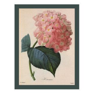 ヴィンテージの庭の花、ピンクのアジサイのHortensia ポストカード