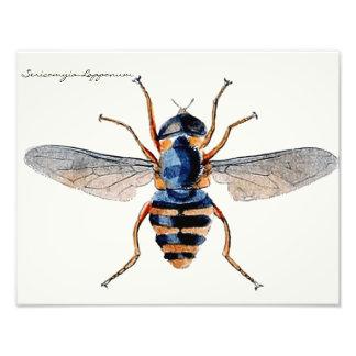 ヴィンテージの昆虫の科学的な昆虫学のはえ フォトプリント