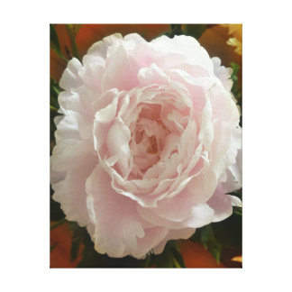 ヴィンテージの暖かい背景の二重開花のピンクのシャクヤク キャンバスプリント
