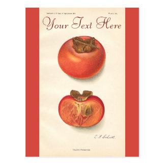ヴィンテージの柿の郵便はがき ポストカード