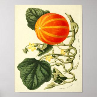 ヴィンテージの植物のポスター-カボチャ ポスター