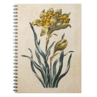 ヴィンテージの植物の花のラッパスイセンのイラストレーション ノートブック
