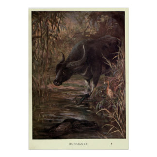 ヴィンテージの水牛Painting (1909年) ポスター