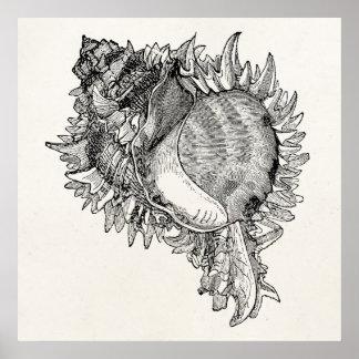 ヴィンテージの海の貝殻の貝の名前入りなテンプレート ポスター