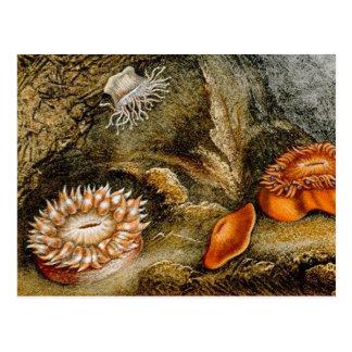 ヴィンテージの海洋生物 ポストカード