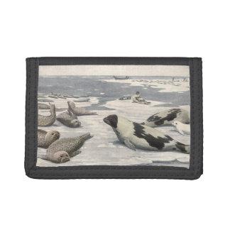 ヴィンテージの海生動物、北極雪のタテゴトアザラシ