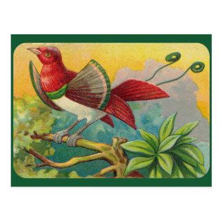 ヴィンテージの熱帯鳥のプリント ポストカード