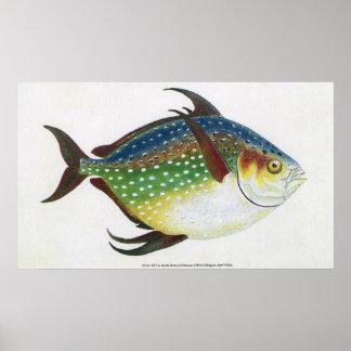 ヴィンテージの熱帯Opahの魚、海洋の水生動物 プリント