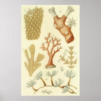 ヴィンテージの珊瑚動物、科学の教科書の生物学 ポスター