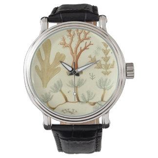 ヴィンテージの珊瑚動物、科学の教科書の生物学 腕時計