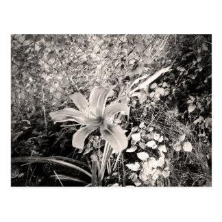 ヴィンテージの白黒オニユリの花 ポストカード