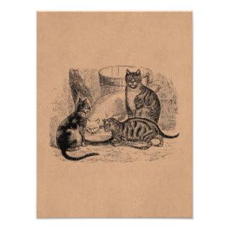 ヴィンテージの納屋猫の19世紀猫のイラストレーションのテンプレート フォトプリント
