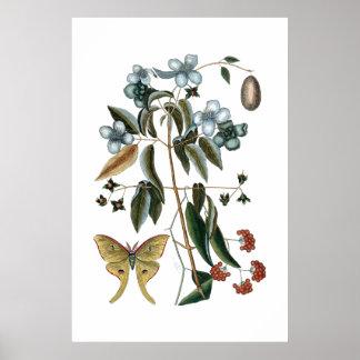 ヴィンテージの緑の植物のポスター ポスター