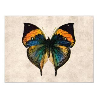 ヴィンテージの蝶イラストレーション1800'sの蝶 フォトプリント