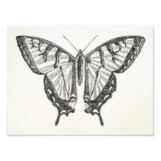 ヴィンテージの蝶名前入りな蝶昆虫 フォトプリント