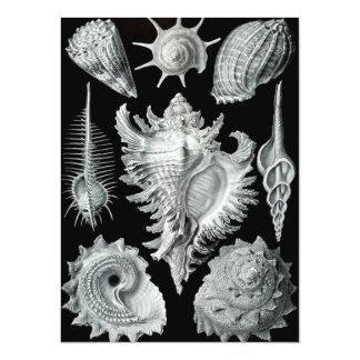 ヴィンテージの貝殻のプリント カード