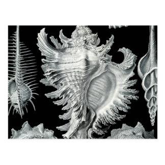 ヴィンテージの貝殻のプリント ポストカード