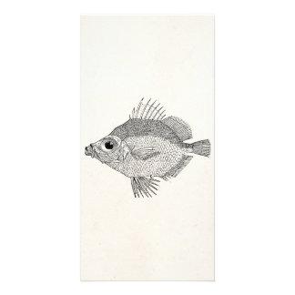 ヴィンテージの雄豚の魚-水中競技はテンプレートのブランクを採取します カード