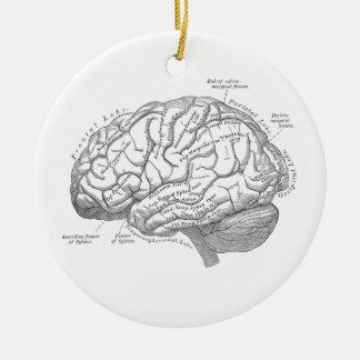 ヴィンテージの頭脳の解剖学 セラミックオーナメント