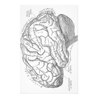ヴィンテージの頭脳の解剖学 便箋